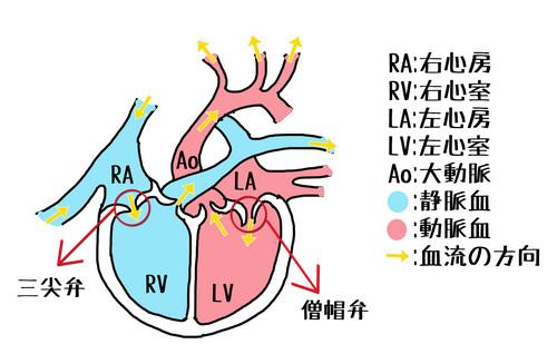 心臓.jpg